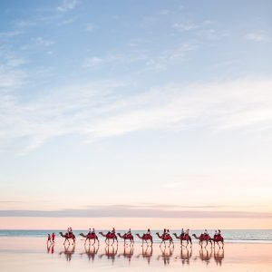 red sun camels