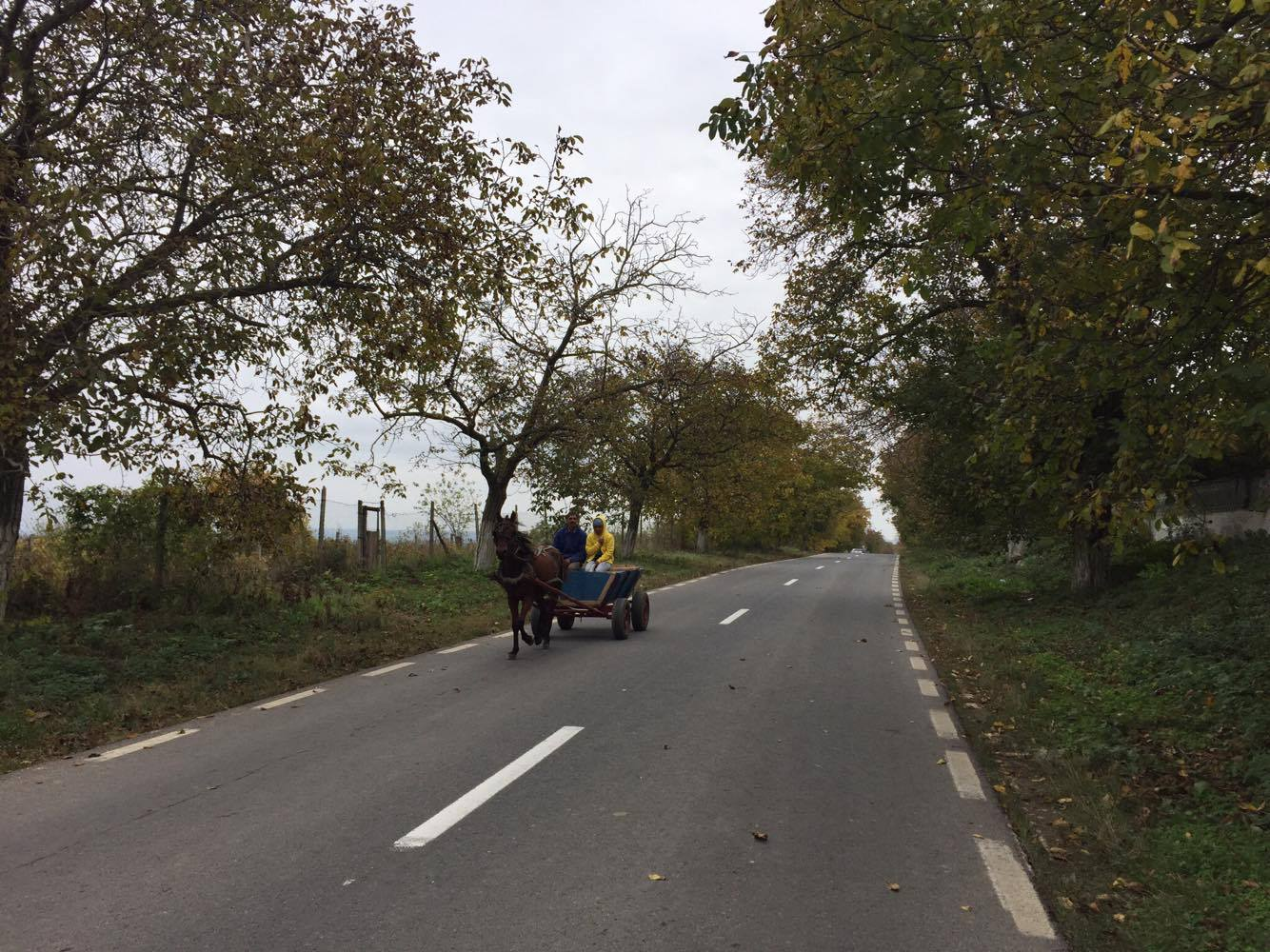 horse and cart romania paul michael cycle for cystic fibrosis