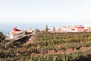 vineyards on tenerife