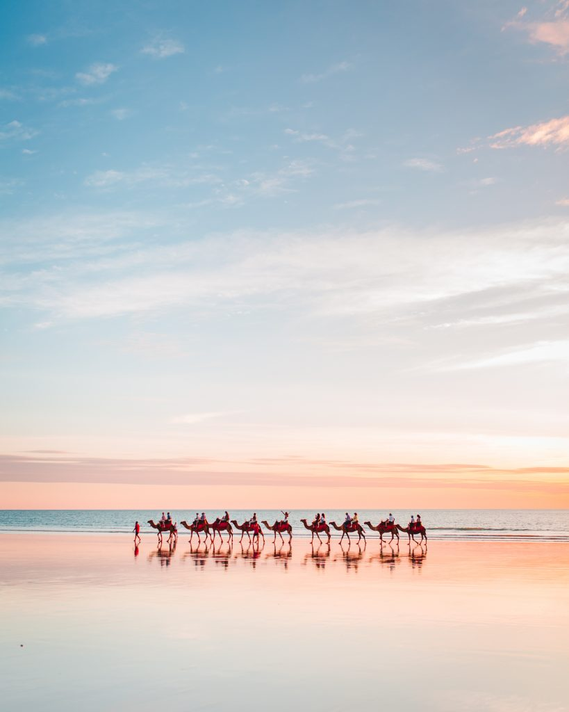 broome camels