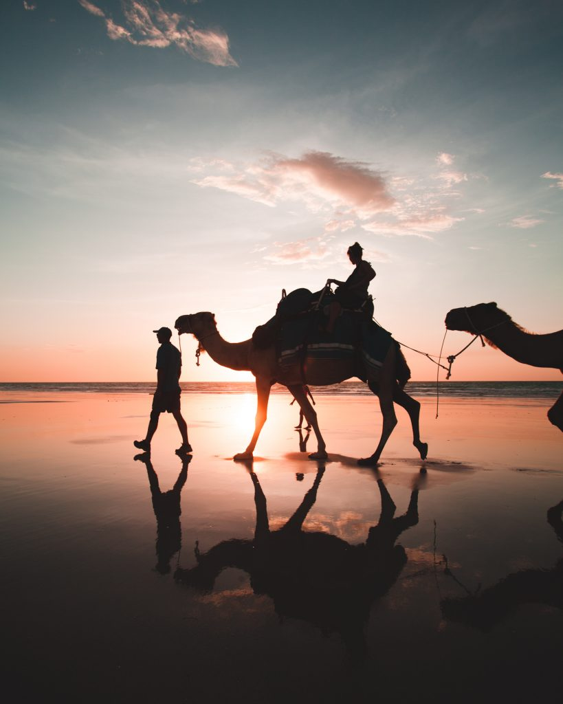 cable beach camels silhouette