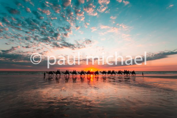 cable beach camels stock photography