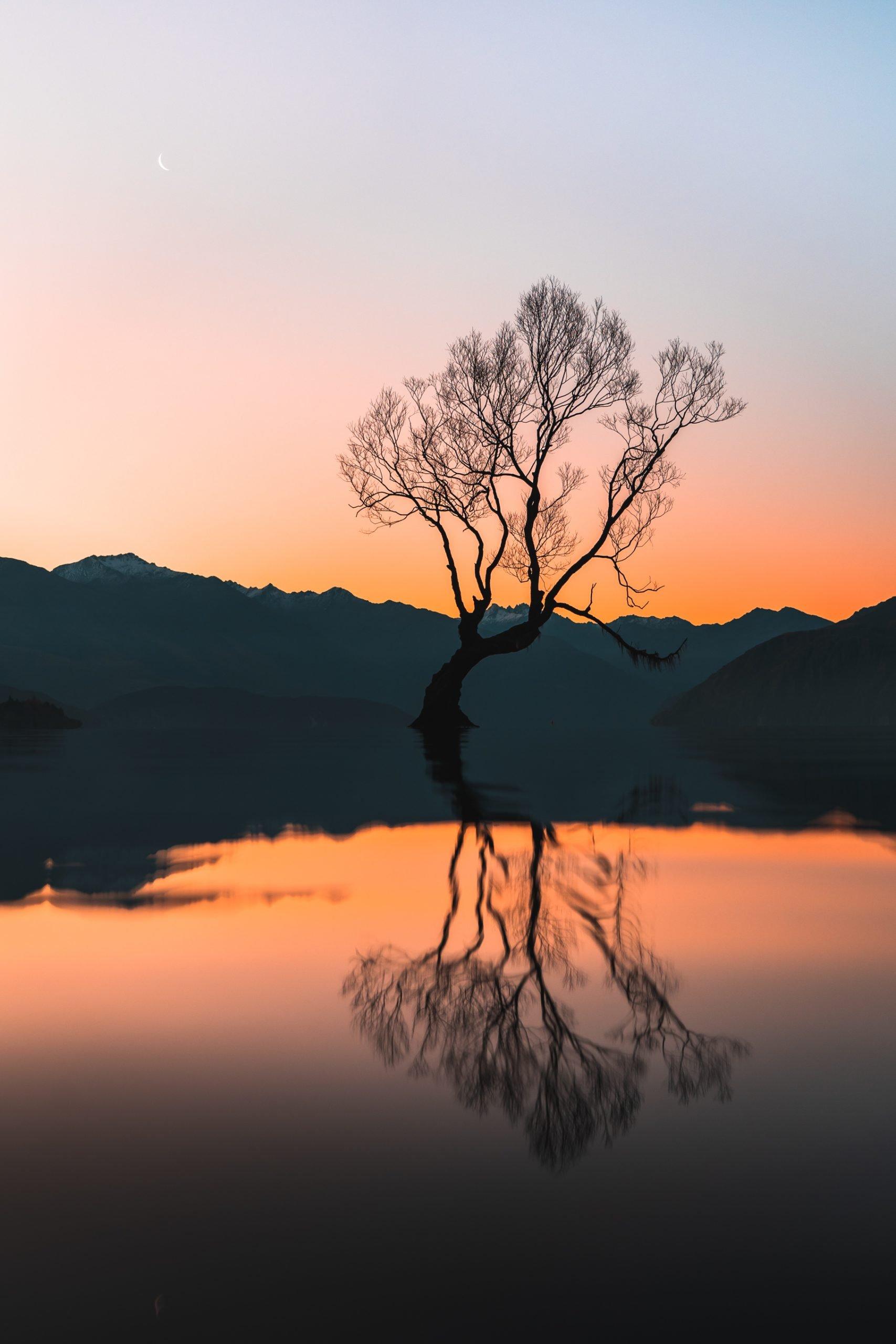 that wanaka tree lake wanaka